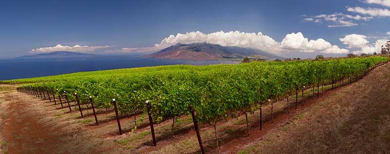 At Maui Wine, you'll enjoy breathtaking views over vineyards and sea. Photo credit: Maui Wine